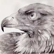 Art 'Golden Eagle'